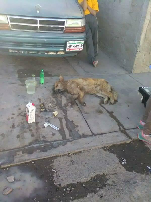 Mujer envenenena perros